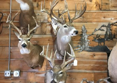 Deer Mount 1