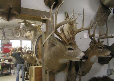 Deer Mount 7