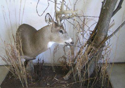 Deer Mount 9