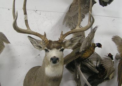 Deer Mount 10
