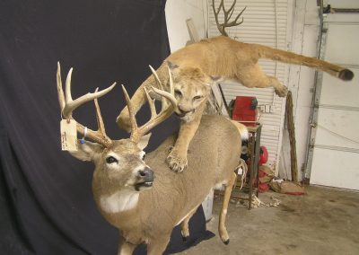 Big Game Mount 6