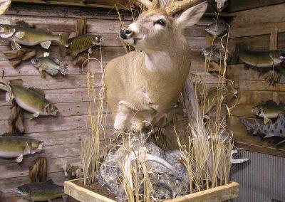 Deer Mount 20