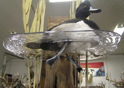 Bird Mount 13