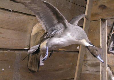 Bird Mount 22