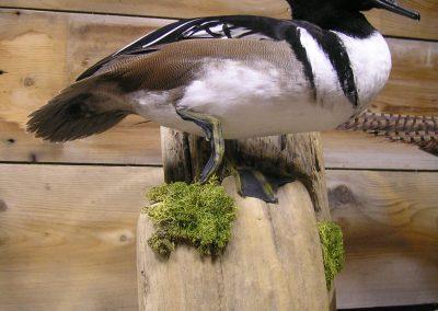 Bird Mount 26