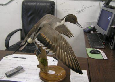 Bird Mount 7