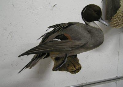 Bird Mount 8