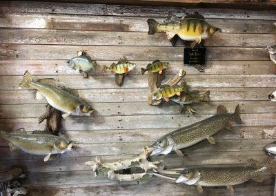 Fish Mount 1