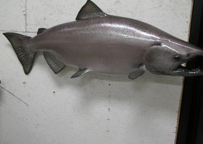 Fish Mount 21