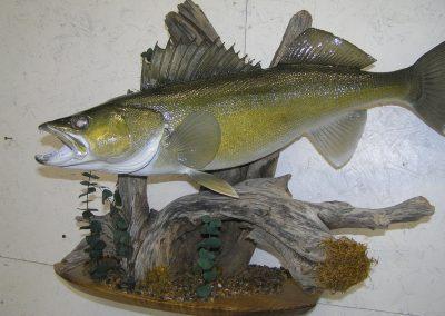 Fish Mount 9